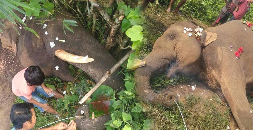 करंट लगने से मरे दाे जंगली हाथी, ग्रामीण ने दी श्रद्धांजली