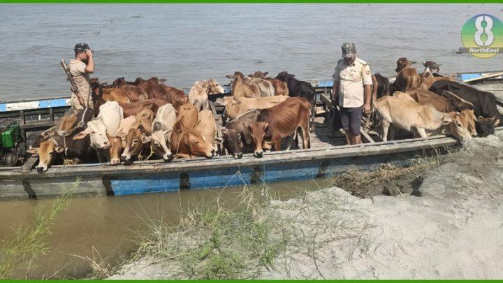 ब्रह्मपुत्र के खुले जलमार्ग से बांग्लादेश काे हाे रही गाय की तस्करी